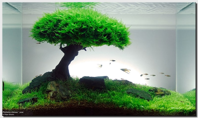 Can bonsai trees live underwater?