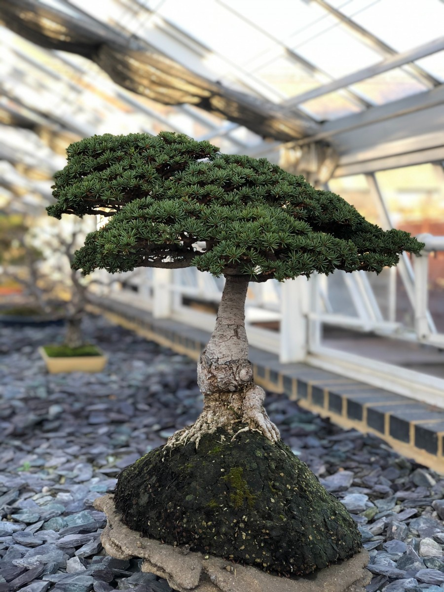 How To Fertilize A Bonsai Tree Step By Step Bonsaiforrest